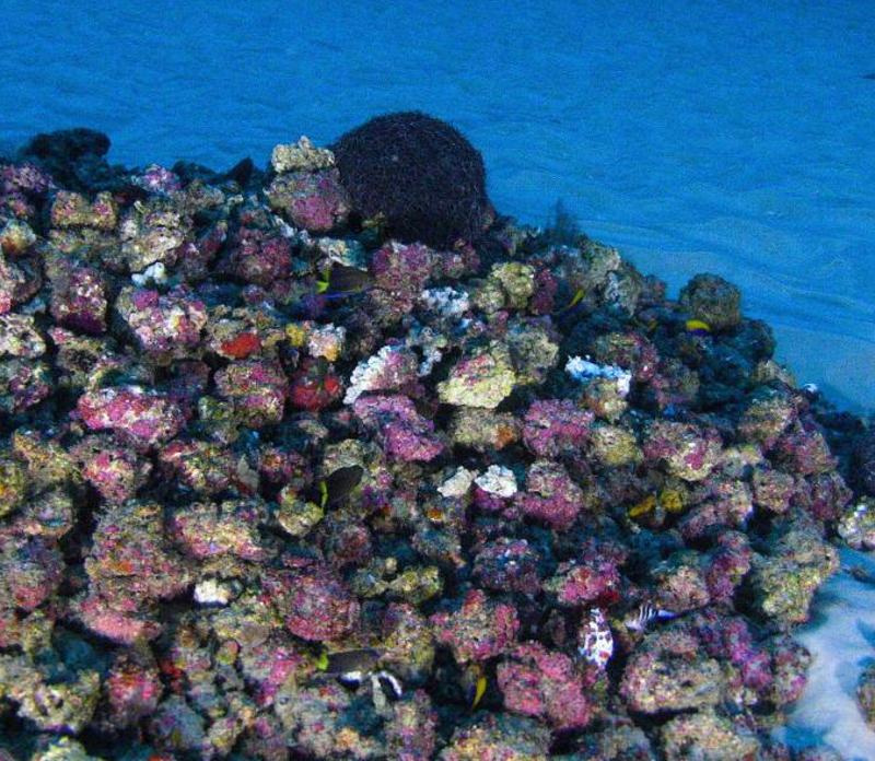 Sensationsfund: Riesiges Korallenriff im Amazonas