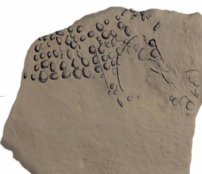 Funde aus der Steinzeit