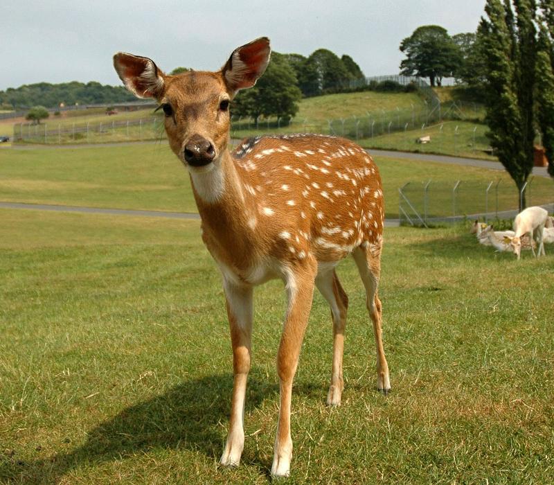 """Als """"Bambi"""" das Licht der Welt erblickte"""