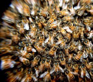 Zucker für die Bienen