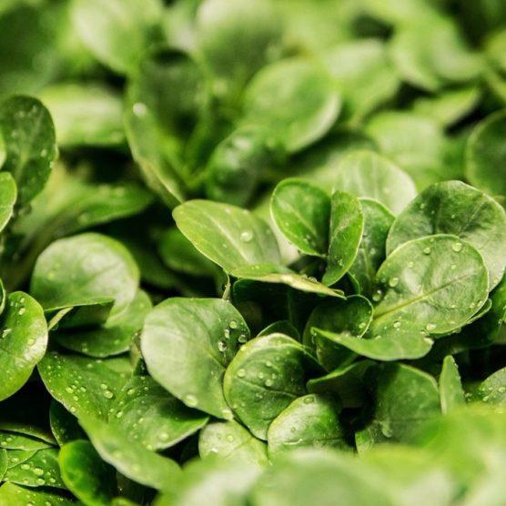Heimisches Gemüse, Obst und Salat im März