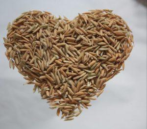 Reis – braun oder weiß?