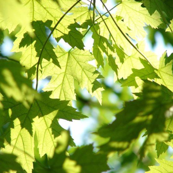 Good Fact - Tag des Baumes