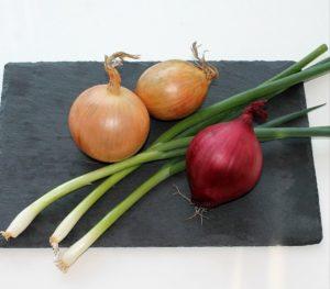 Küchenapotheke: Zwiebel