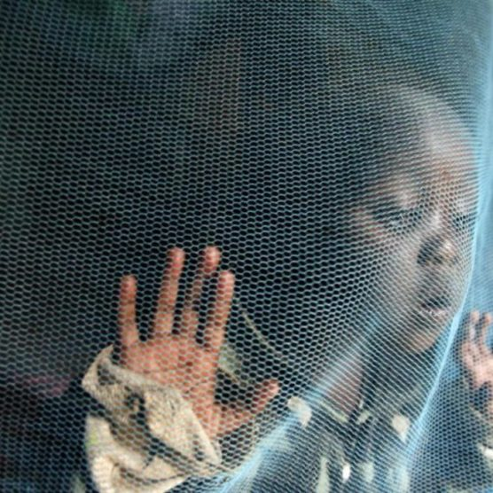 WHO für stärkeren Einsatz gegen Malaria in Afrika