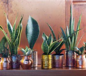 Bessere Luft mit Grünpflanzen im Haus