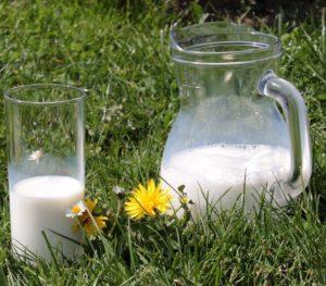 Milch: besser als ihr Ruf