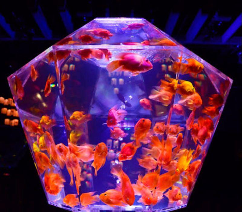 Kunst im Goldfischglas (mit Video)