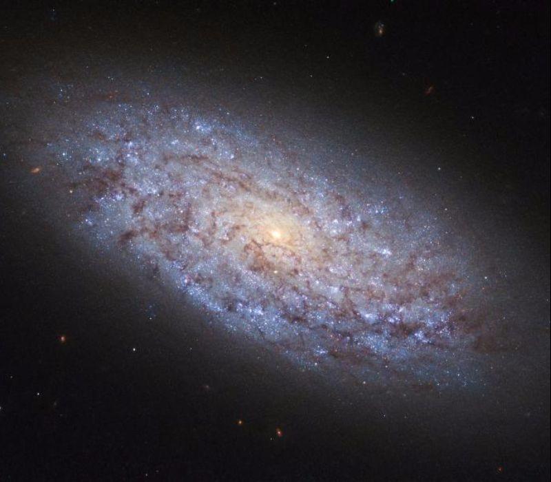 Kleiner Wächter der Galaxie